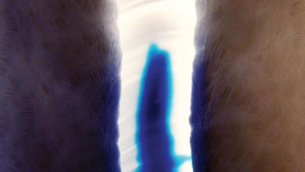 "EP REVIEW: STUBBORN HEART 'PENETRATE 12""'"